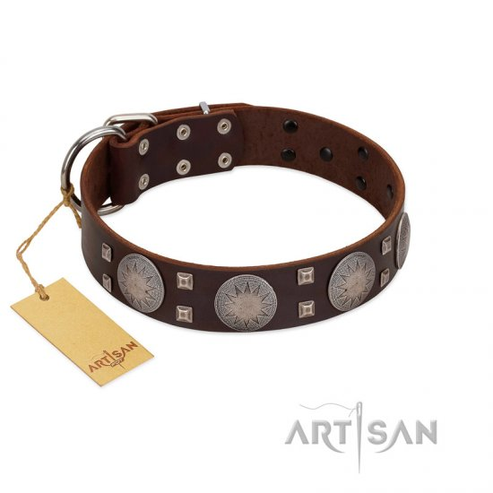 """Sun in Barchans"" Modern FDT Artisan Brown Leather Doberman Collar with Engraved Stars on Round Plates and Studs"