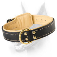 Royal Nappa Padded Hand Made Leather Dog Collar for Dobermans