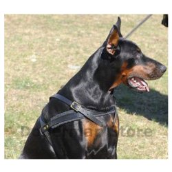 doberman-harness-leather