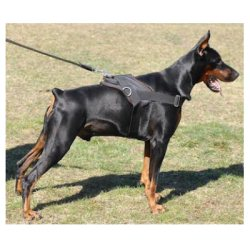 doberman-harness