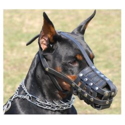 vinteletion-doberman-muzzle