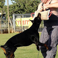 Doberman Dog Muzzles