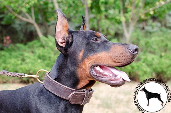 Agitation/attack training leather Doberman collar