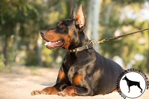 Gorgeous decorated leather Doberman collar at affordable price