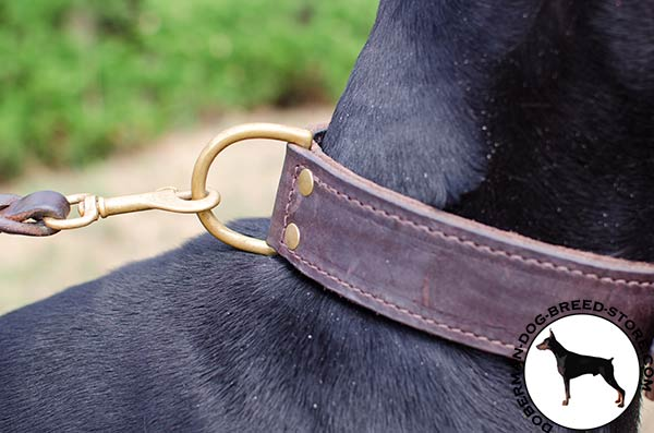 Brass hardware on agitation collar for Doberman
