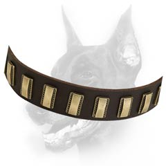 Most demandable decorated dog collar