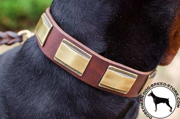 Polished plates riveted to leather Doberman collar