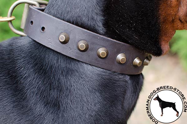 Safe pyramids on Doberman collar