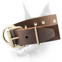 Doberman collar with strong buckle