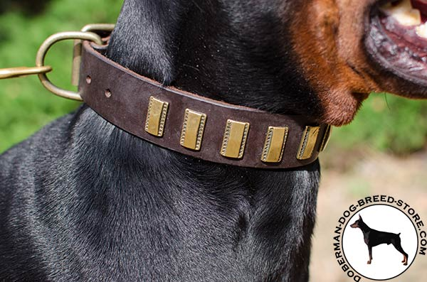 Riveted brass plates on leather Doberman collar