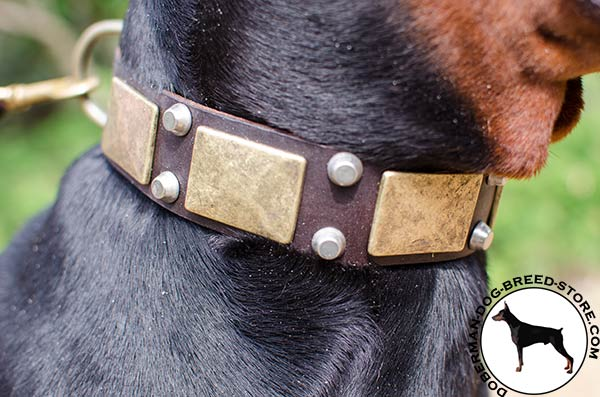 Stylish Doberman collar with nickel plated pyramids and brass plates
