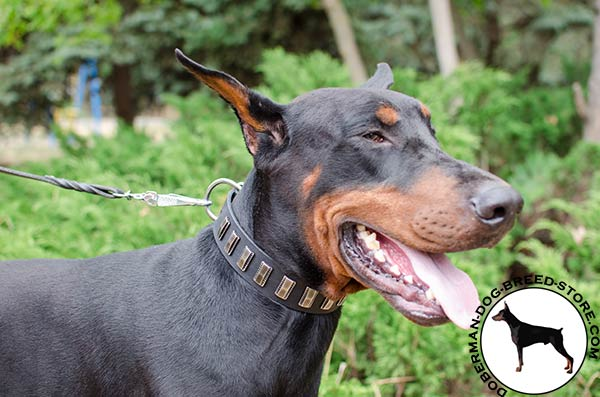 First-rate Doberman collar manufactured of the best materials