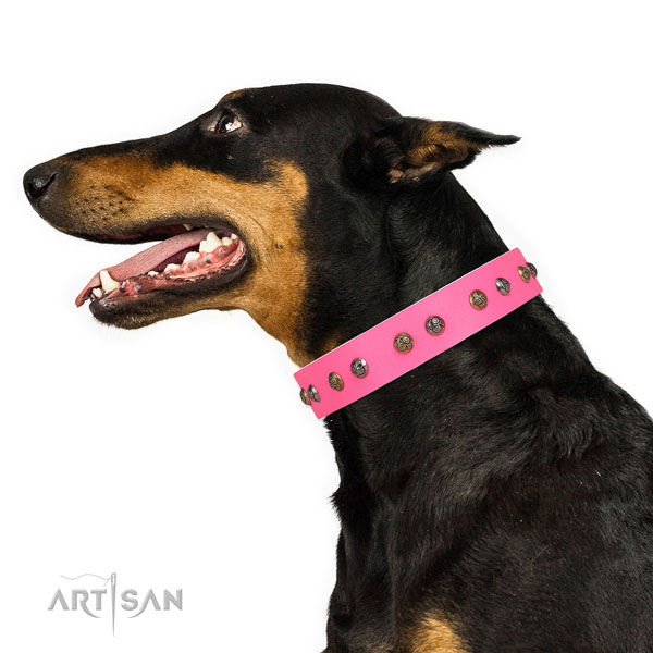 Everyday walking decorated dog collar made of durable genuine leather