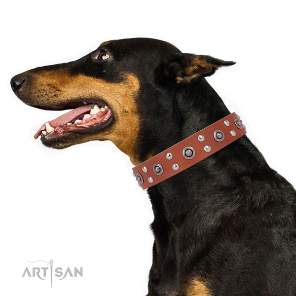 Stylish walking dog collar with exquisite adornments