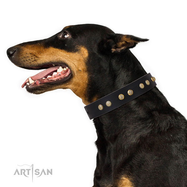Top notch decorations on comfortable wearing full grain natural leather dog collar