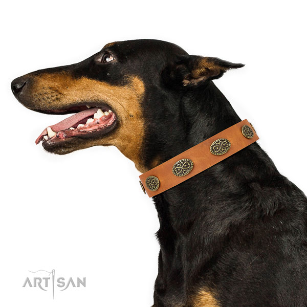 Stunning adornments on handy use natural genuine leather dog collar