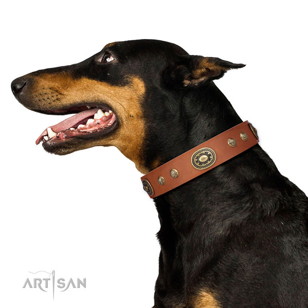 Unusual embellishments on stylish walking dog collar