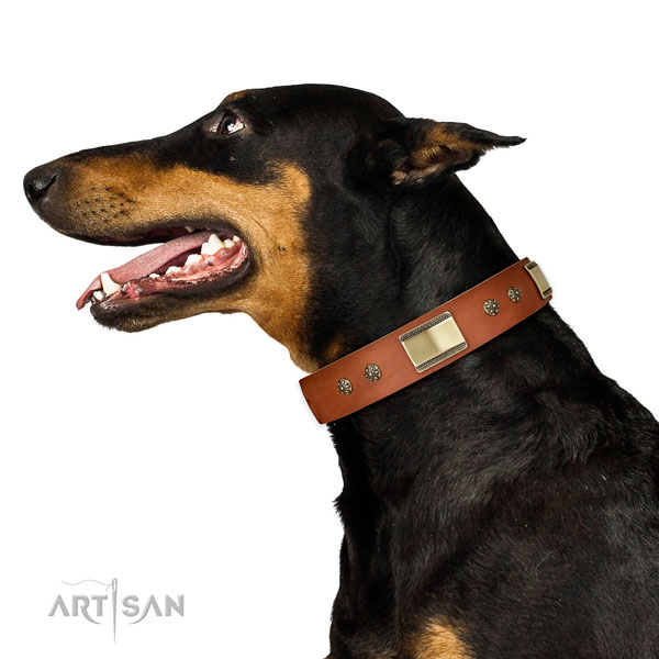 Basic training dog collar of leather with stylish studs