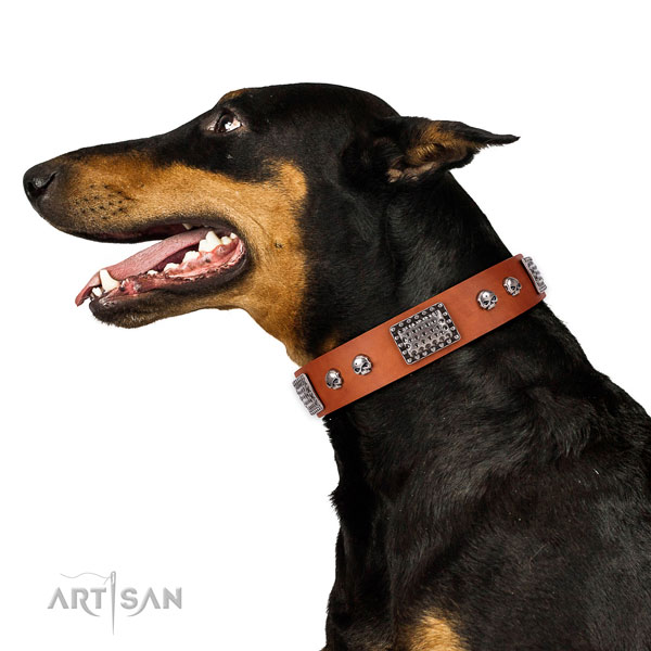 Significant leather collar for your attractive dog