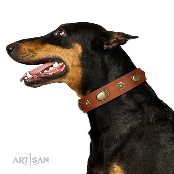 Fancy walking dog collar of leather with top notch adornments