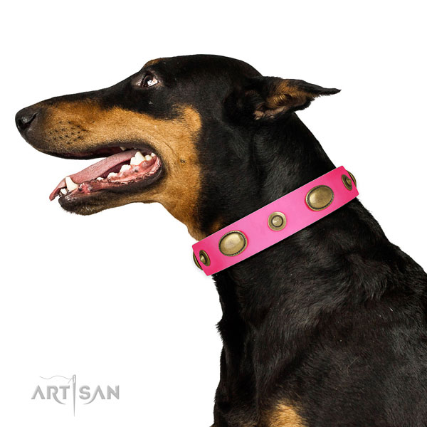 Daily walking dog collar of leather with fashionable studs
