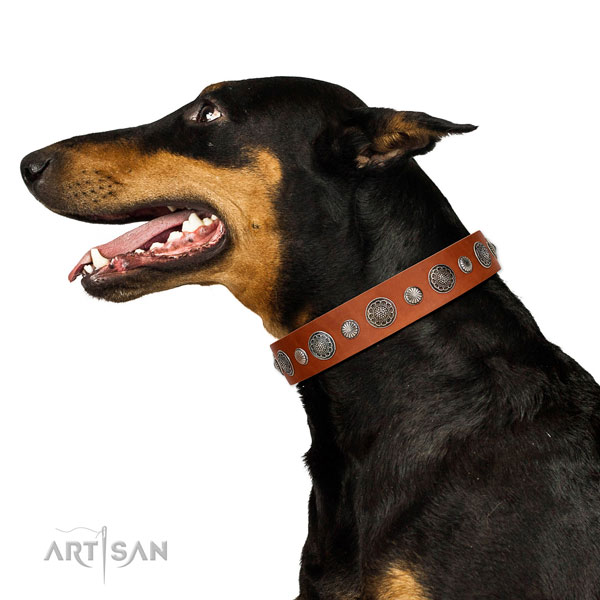 Remarkable natural leather dog collar with corrosion resistant hardware