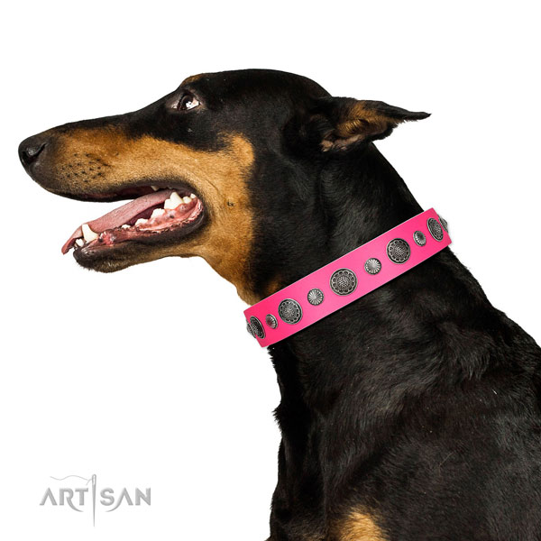Embellished full grain leather dog collar with corrosion resistant hardware