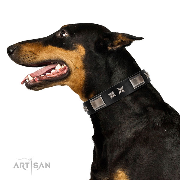 Daily use top rate leather dog collar with embellishments