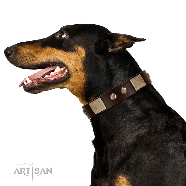 Corrosion resistant fittings on full grain leather dog collar for stylish walking