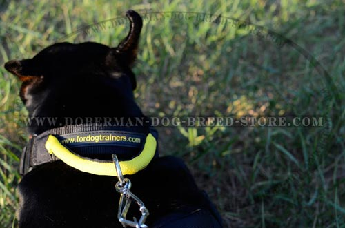 Finest Doberman Nylon Collar