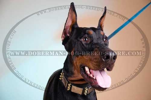 Amazingly Adorned Leather Canine Collar for Dobermans