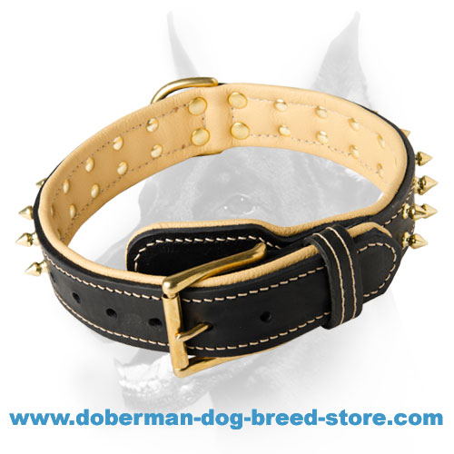 Newest leather dog collar for stylish Dobermans