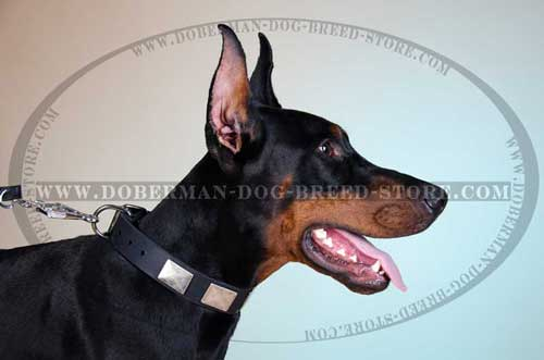 Hand Decorated Leather Dog Collar for Dobermans