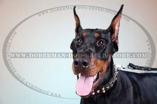 Best Walking Leather Dog Collar for Dobermans
