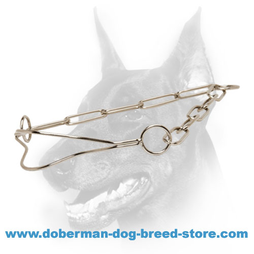 Doberman breed show collar of chromium plated steel