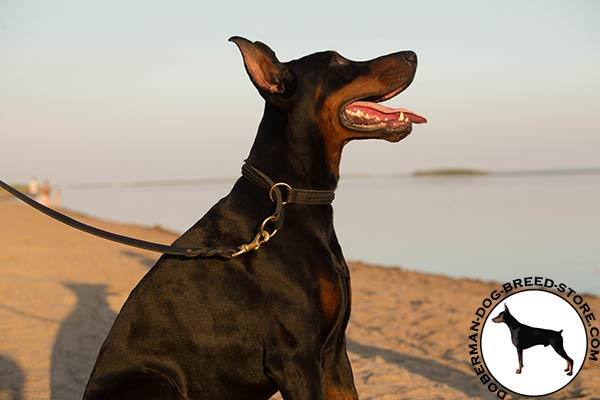 Premium quality leather Doberman collar with brass O-rings