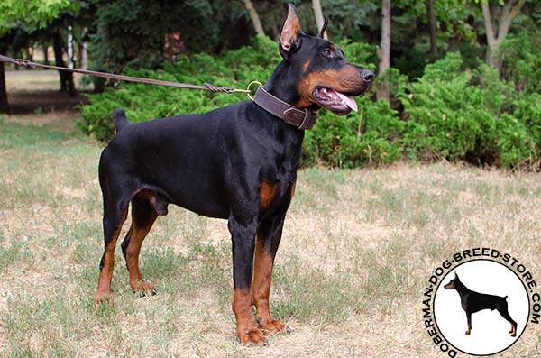Classic leather collar for Doberman