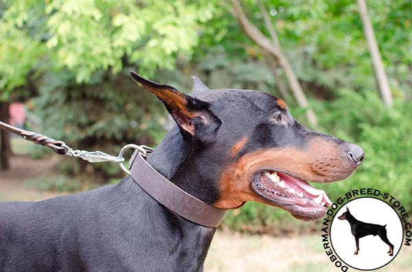 Comfortable leather Doberman collar