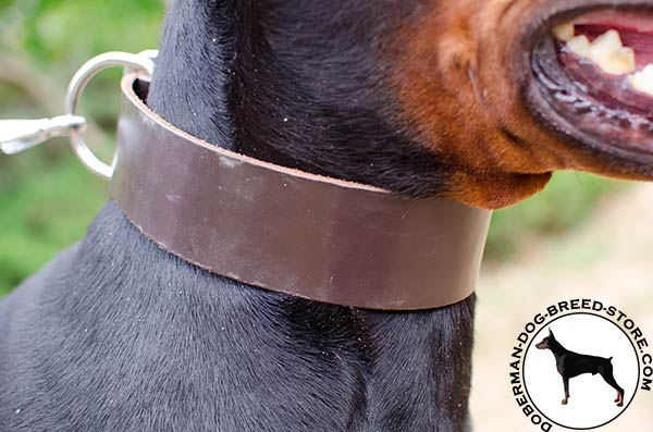 Royal quality leather collar for Doberman