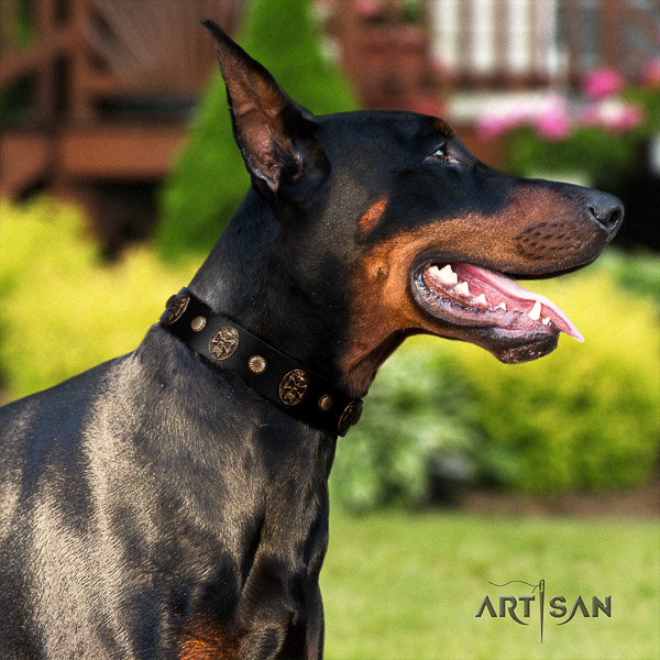 Doberman walking full grain leather dog collar with adornments