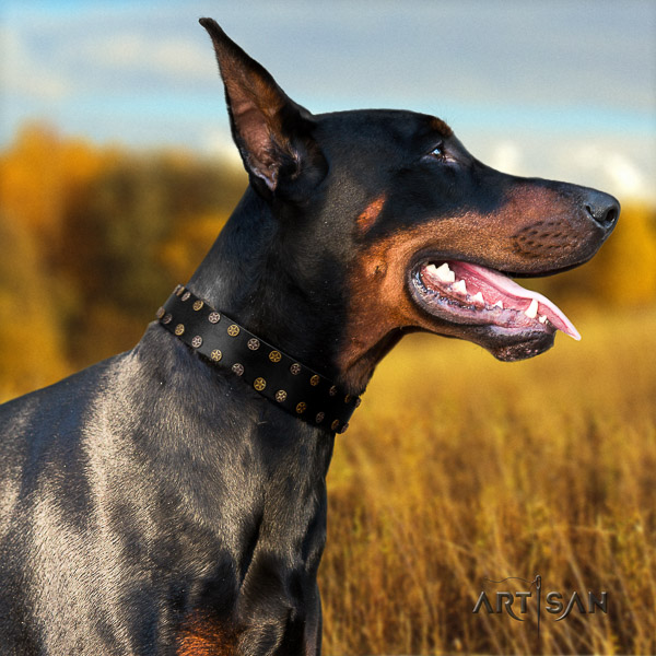 Doberman comfortable wearing natural genuine leather dog collar with studs
