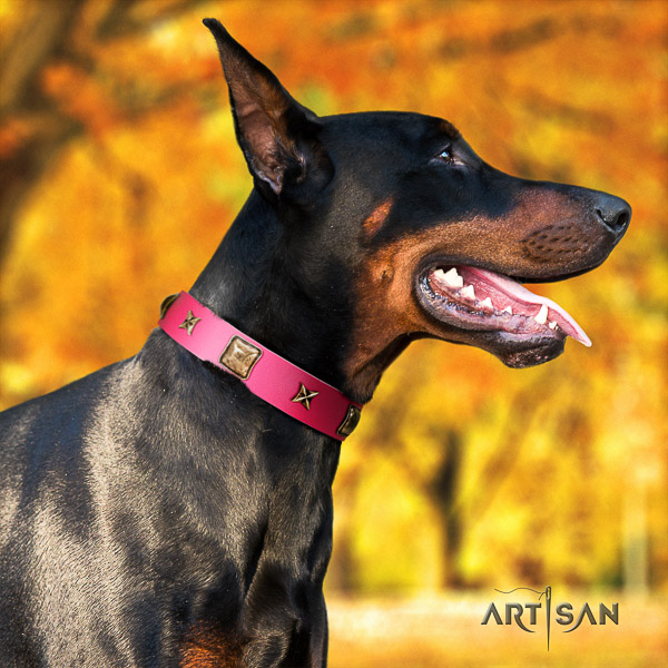 Doberman comfortable wearing leather dog collar with adornments