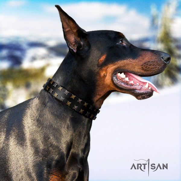 Doberman comfy wearing full grain natural leather dog collar with adornments