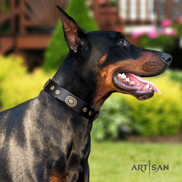 Doberman incredible full grain leather collar with studs for your doggie