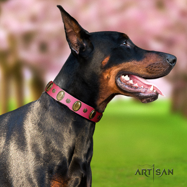 Doberman stylish walking natural genuine leather dog collar with embellishments
