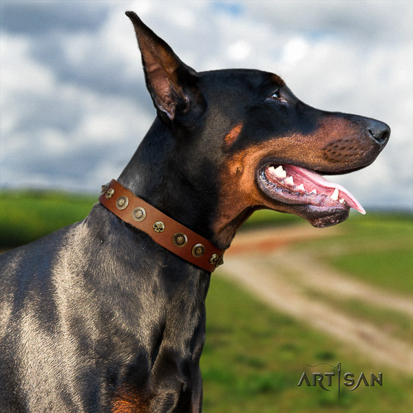 Doberman daily use full grain natural leather dog collar with studs