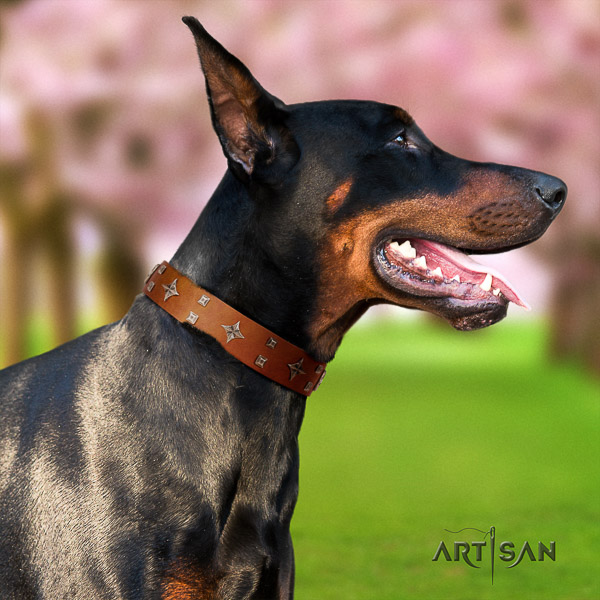 Doberman full grain natural leather dog collar with embellishments for walking