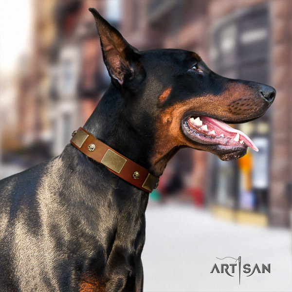 Doberman basic training full grain genuine leather dog collar with adornments