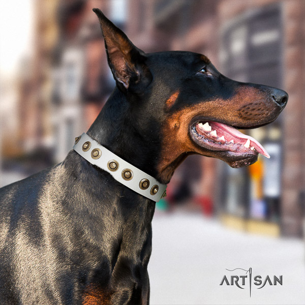 Doberman comfy wearing leather dog collar with studs