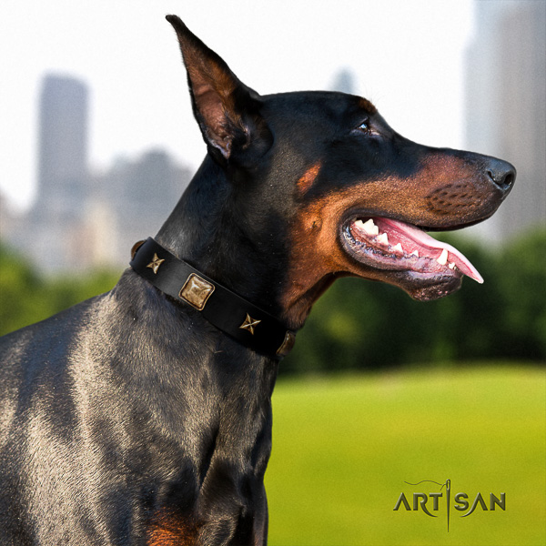 Doberman comfortable wearing full grain natural leather dog collar with decorations